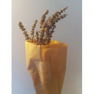 Wildflowers - Droogbloemen (8)